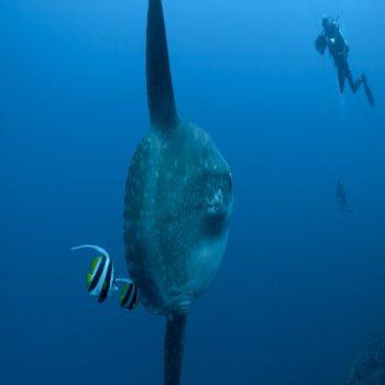 divingwithmolamola@daytripnusapenida.com